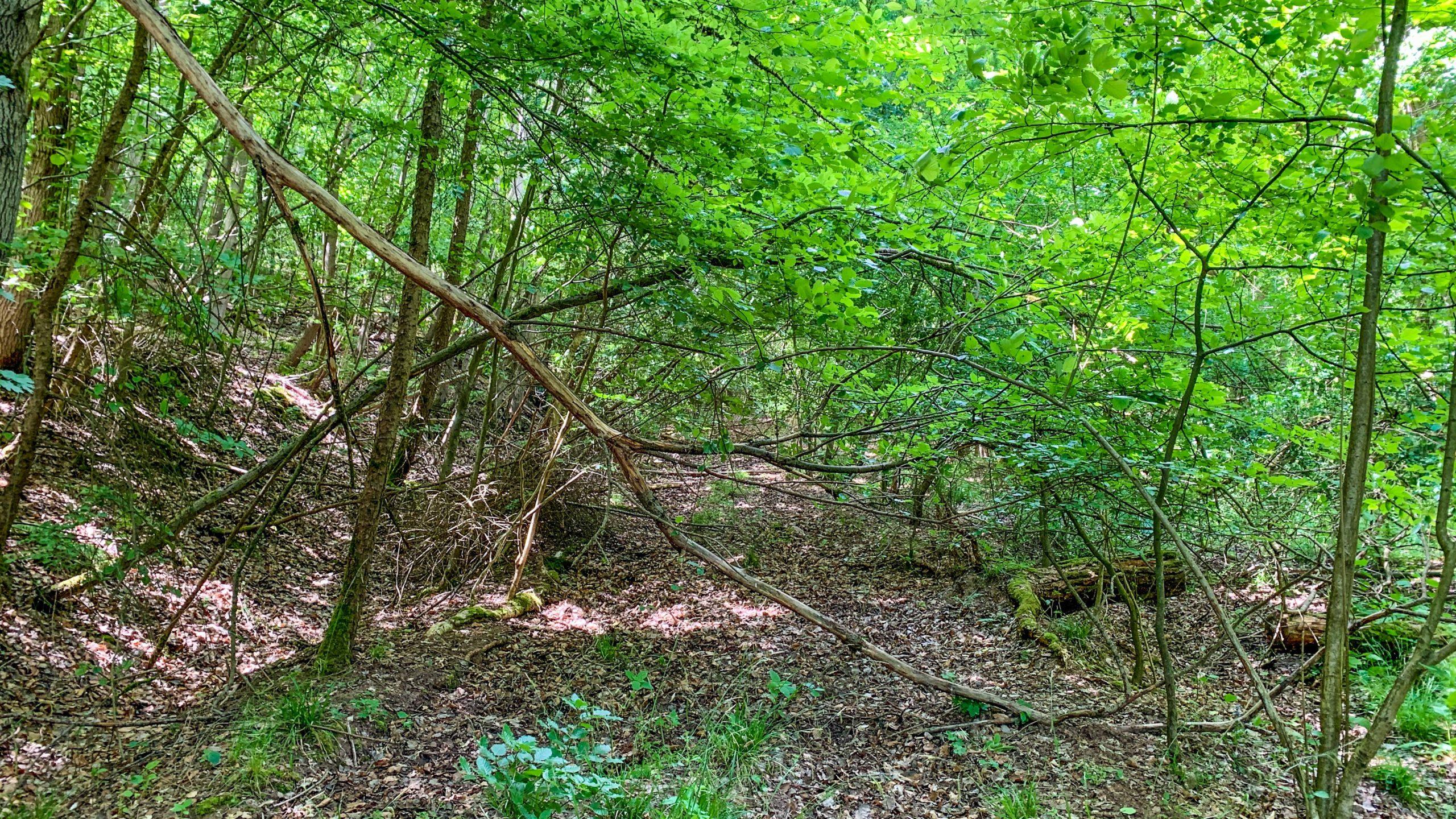 Grenzweg Gerstunger Forst, Einstiegsweg (Kolonnenweg) hoch zum Kirchwaldskopf