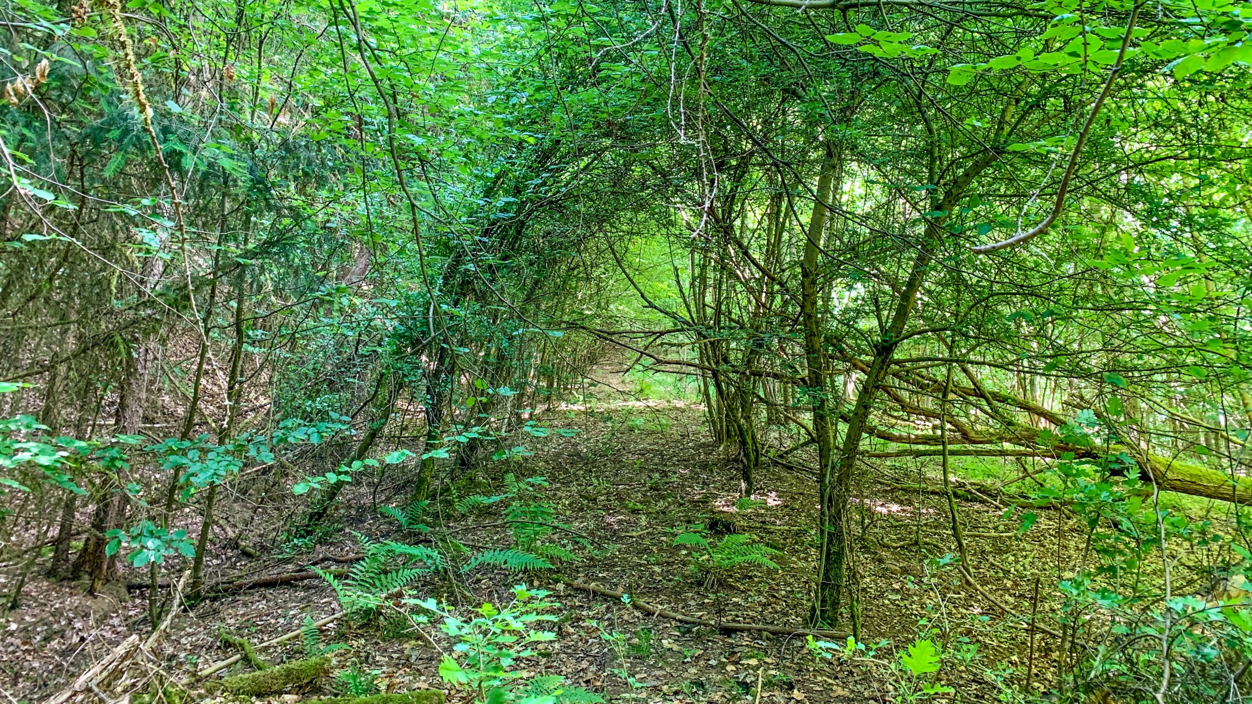 Grenzweg Gerstunger Forst, Kolonnenweg hoch zum Kirchwaldskopf
