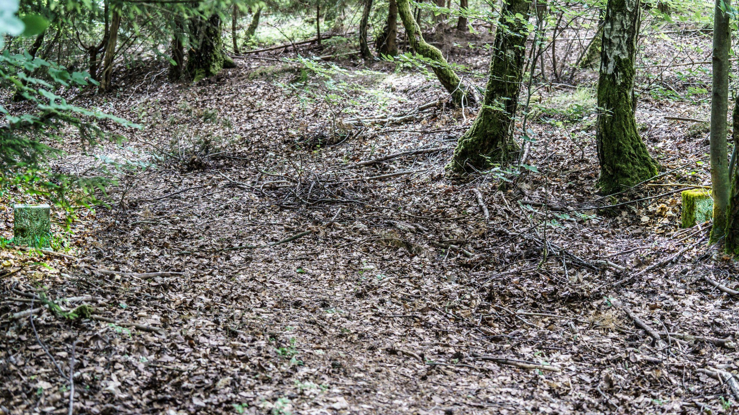 """Grenzweg Gerstunger Forst, nahe Kirchwaldskopf Beginn historischer """"Gemeinsamer Weg"""" mit indirekter Grenzmarkierung"""