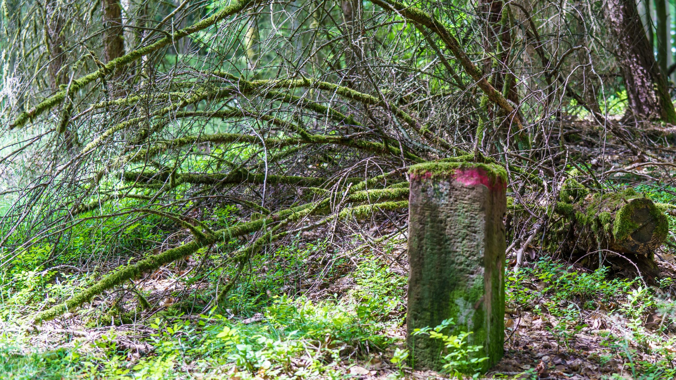 Grenzweg Gerstunger Forst, historischer Grenzstein