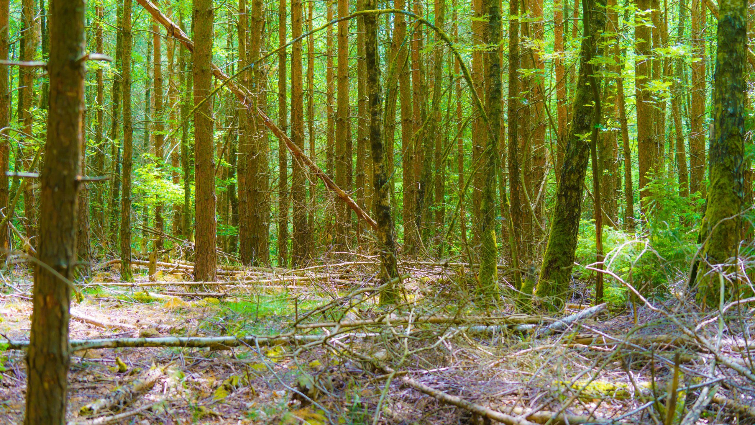 Grenzweg Gerstunger Forst, am gemeinsamen Weg