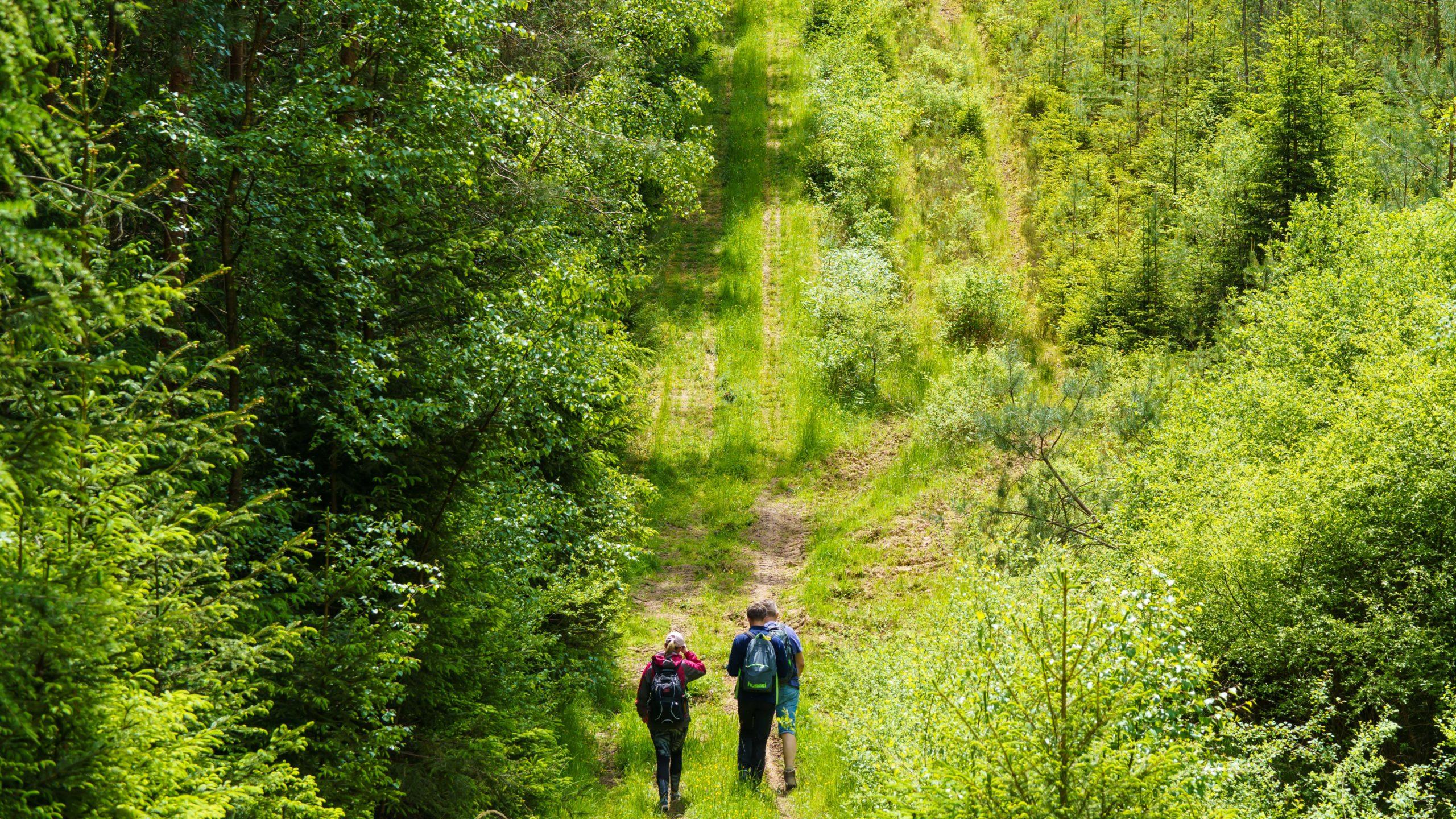 Grenzweg Gerstunger Forst, auf dem Kolonnenweg im Blankenbacher Tal