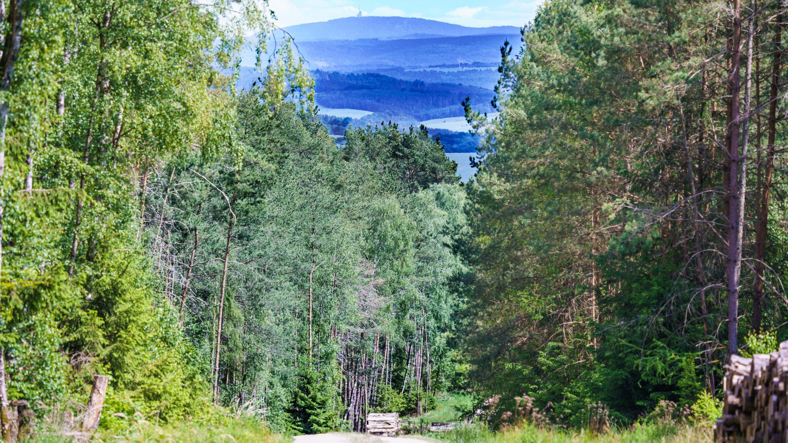 Grenzweg Gerstunger Forst, Blick zum Großen Inselsberg auf dem Kolonnenweg vom Stillmes kommend zum Fuldaischen Berg