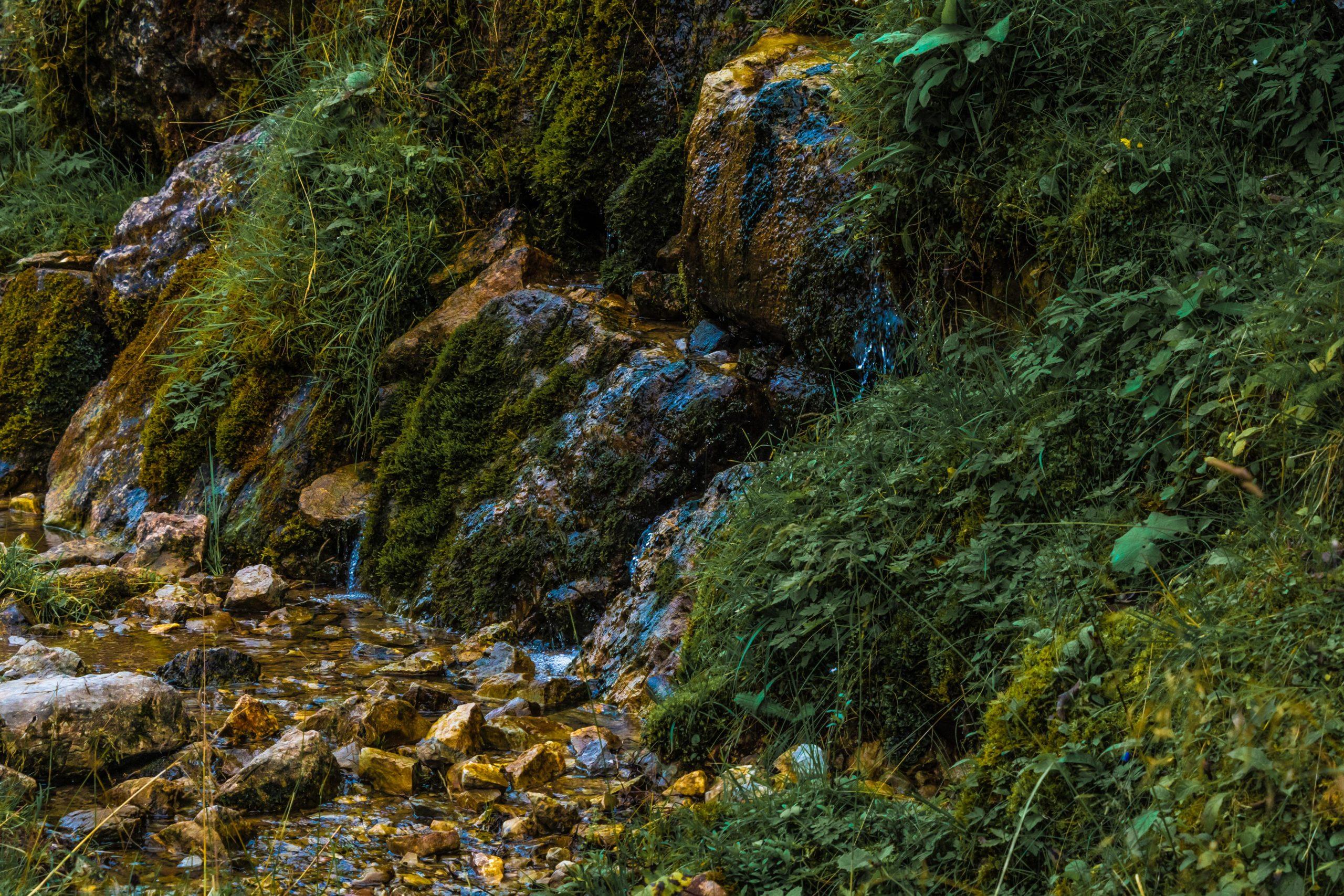 Alpen, Tirol, Tannheimer Tal, Flora