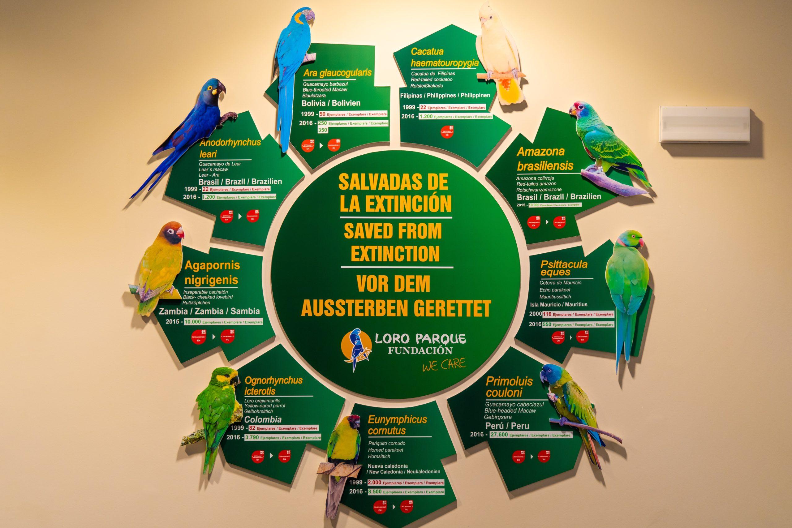 Atlantik, Teneriffa, La Orotava, Loro Parque, weltgrößte Papageien-Zucht