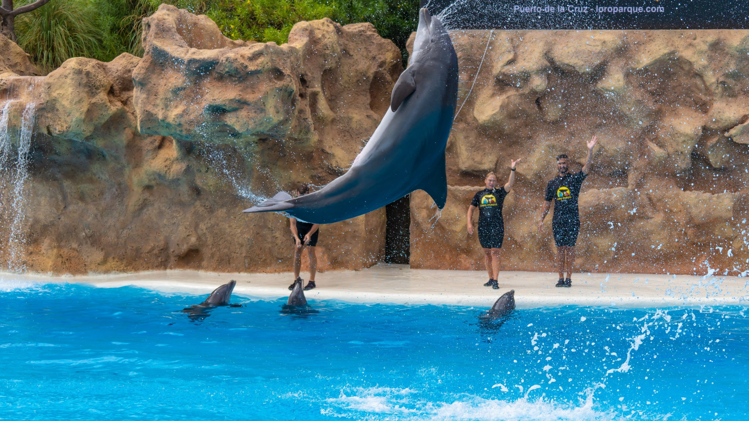 Atlantik, Teneriffa, La Orotava, im Loro Parque, Delfine
