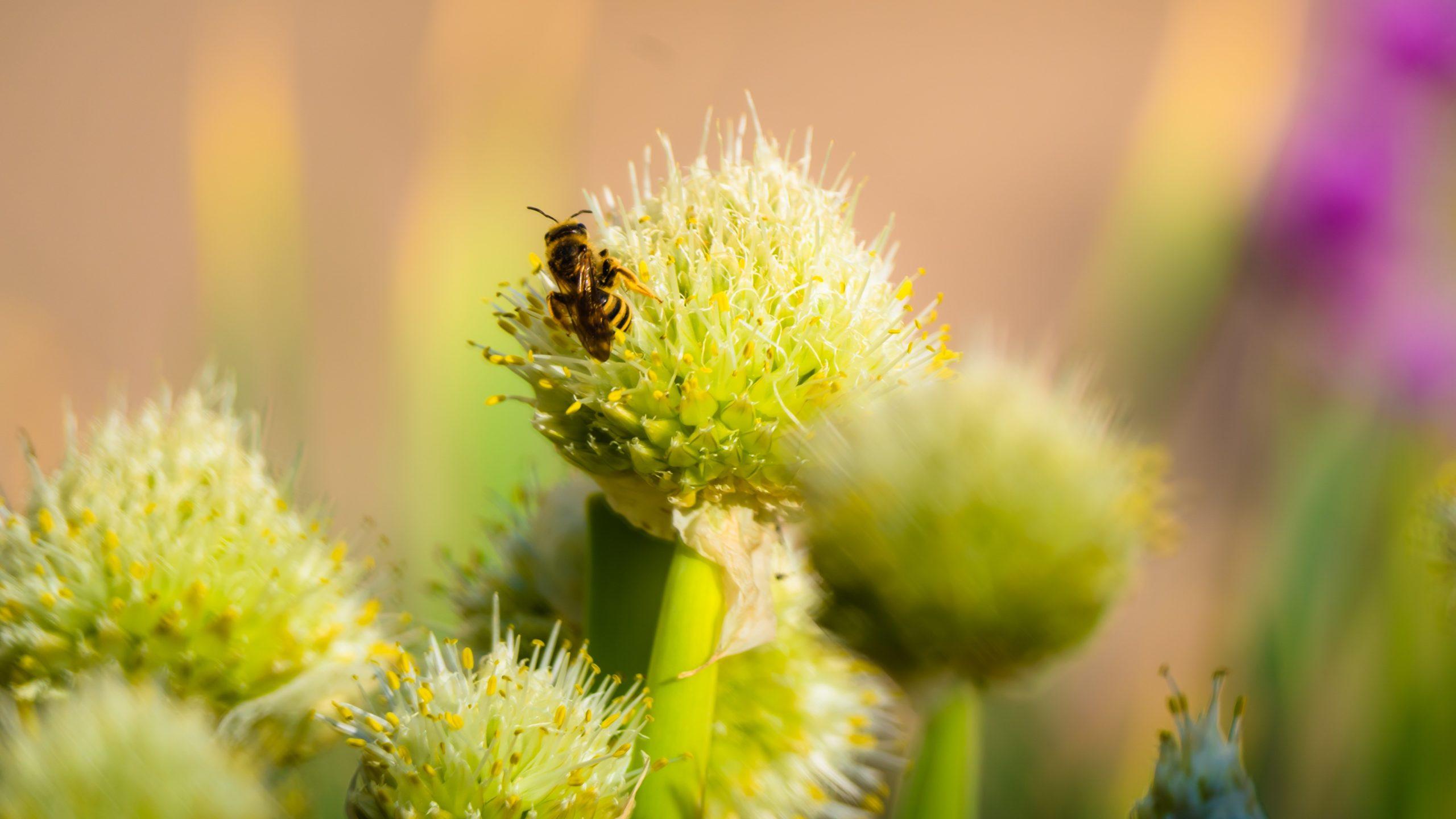 Frühling, Biene