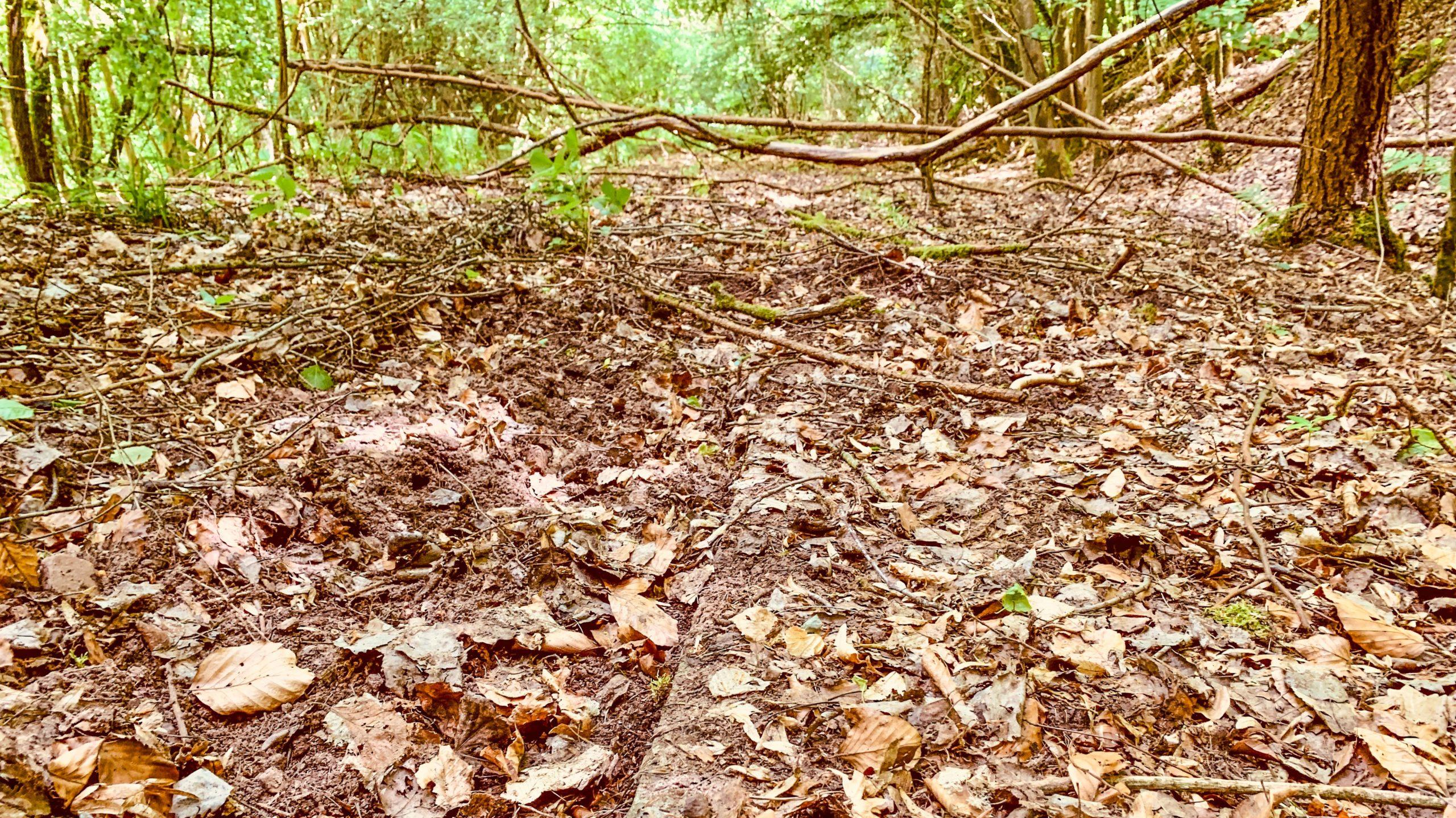 Grenzweg Gerstunger Forst, zugewachsene Platten (Kolonnenweg)