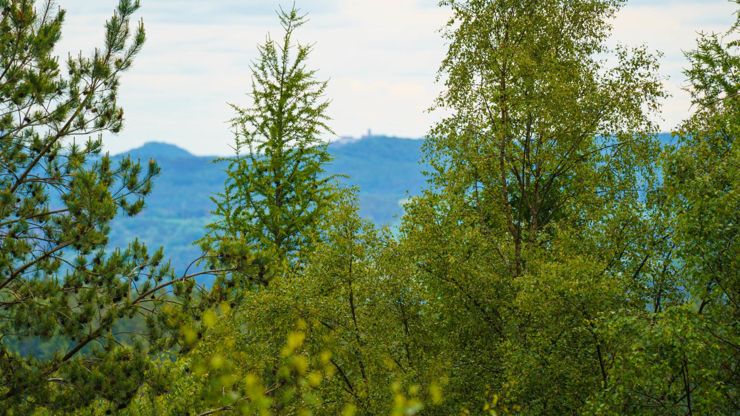 Grenzweg Gerstunger Forst, am Wartburgblick