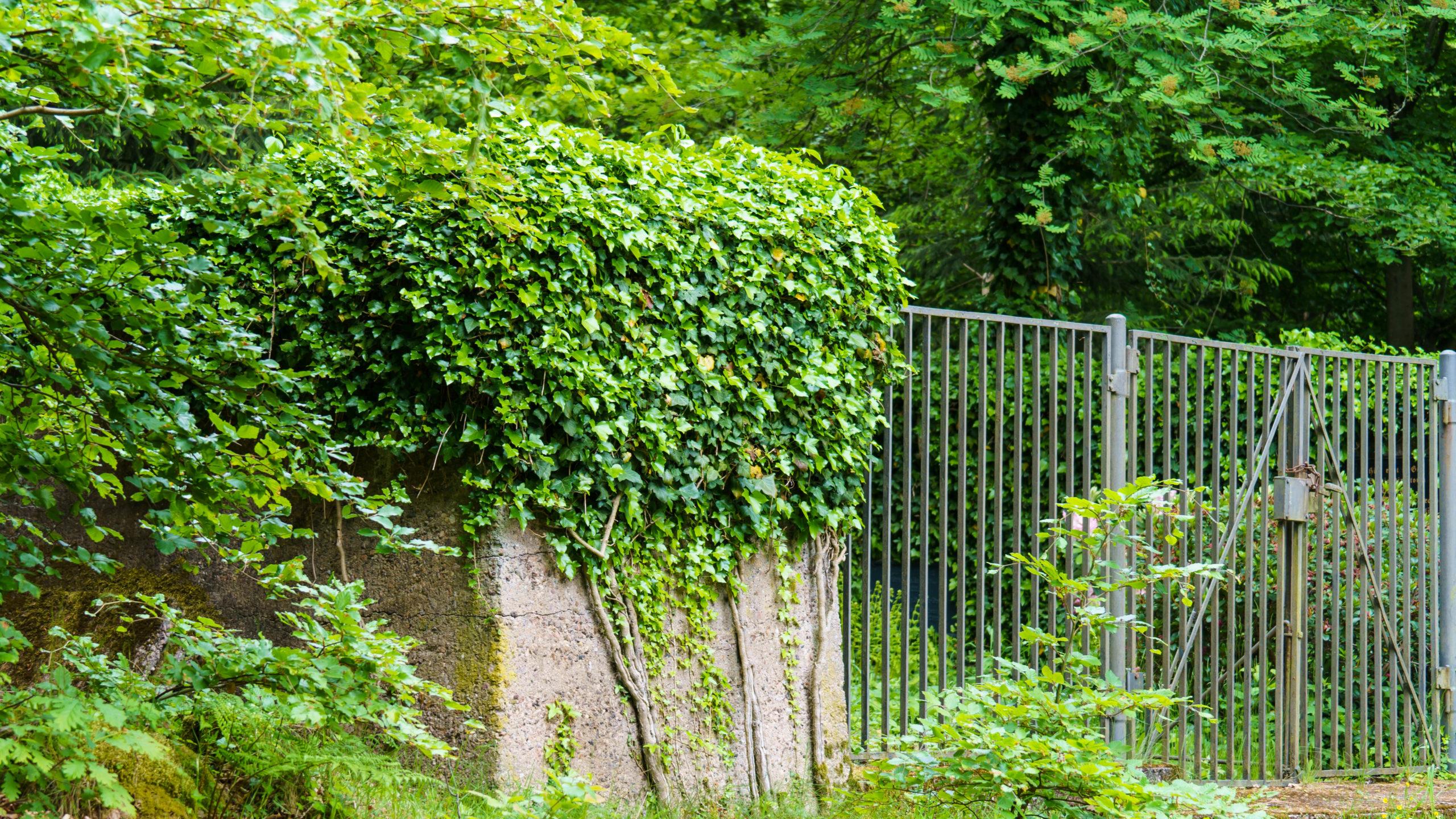 Grenzweg Gerstunger Forst, an der Erbbegräbnis-Stätte im Hessischen nahe Grenzweg