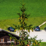 Tirol, Tannheimer Tal, Nesselwängle