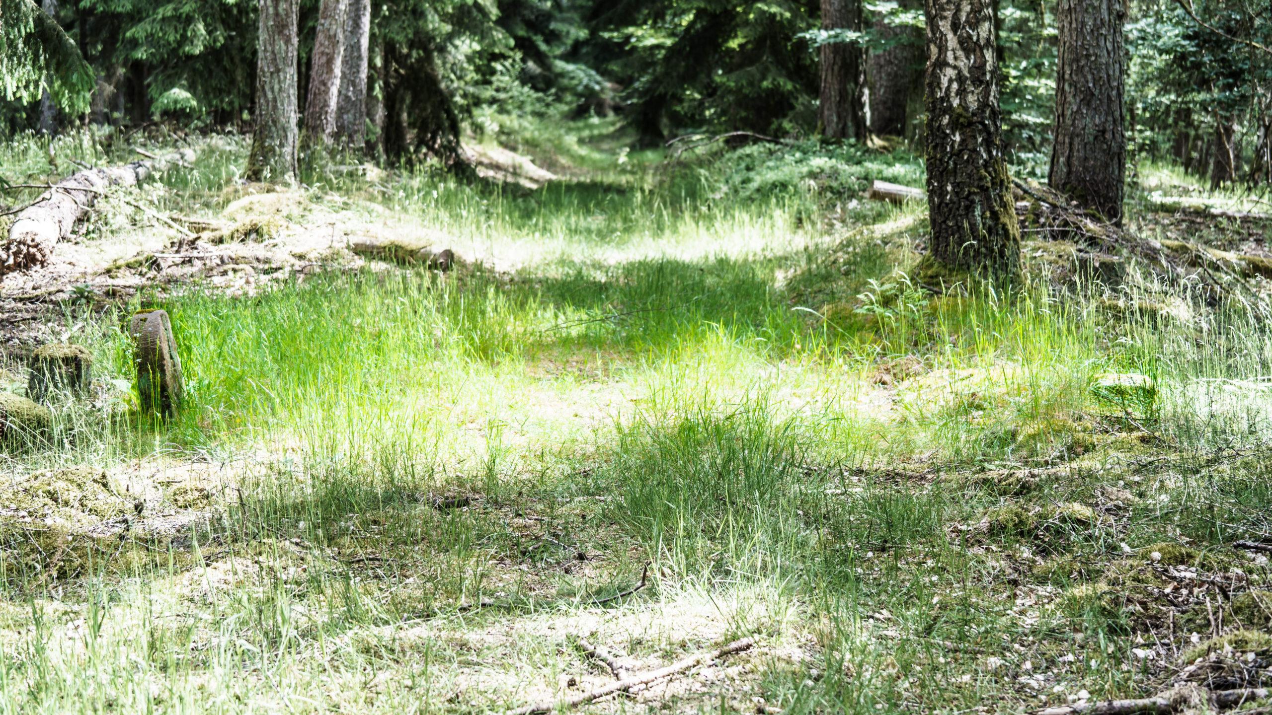 Grenzweg Gerstunger Forst, indirekte Grenzmarkierung auf dem nach Jahrhunderten i.d.R. immer noch gut begehbaren gemeinsamen Weg