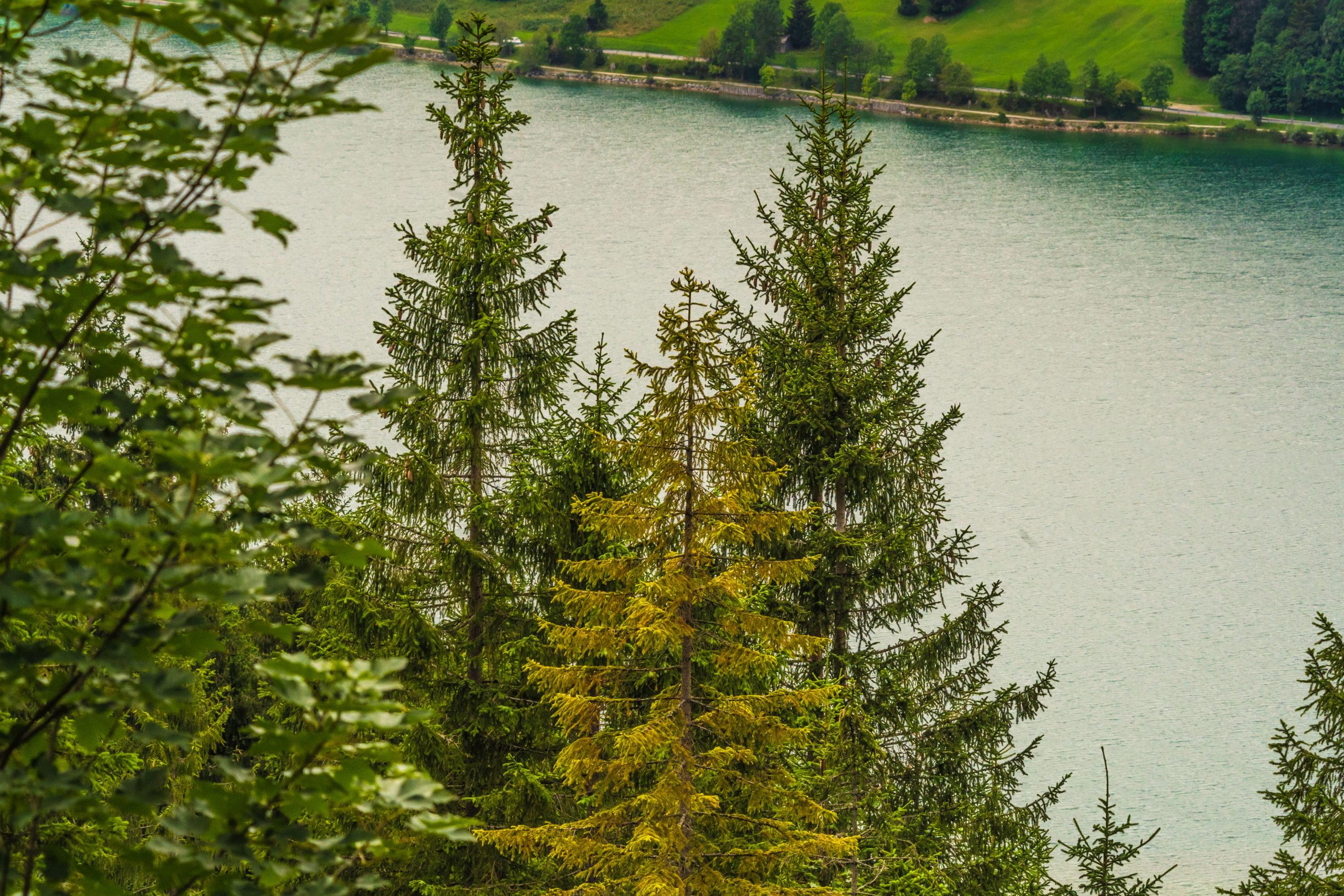 Alpen, Tirol, Tannheimer Tal, am Haldensee