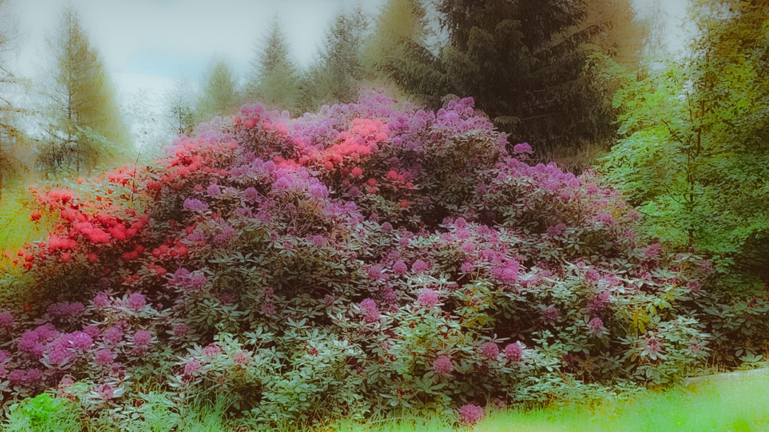 Grenzweg Gerstunger Forst, Rhododendron-Pflanze am Erbbegräbnis