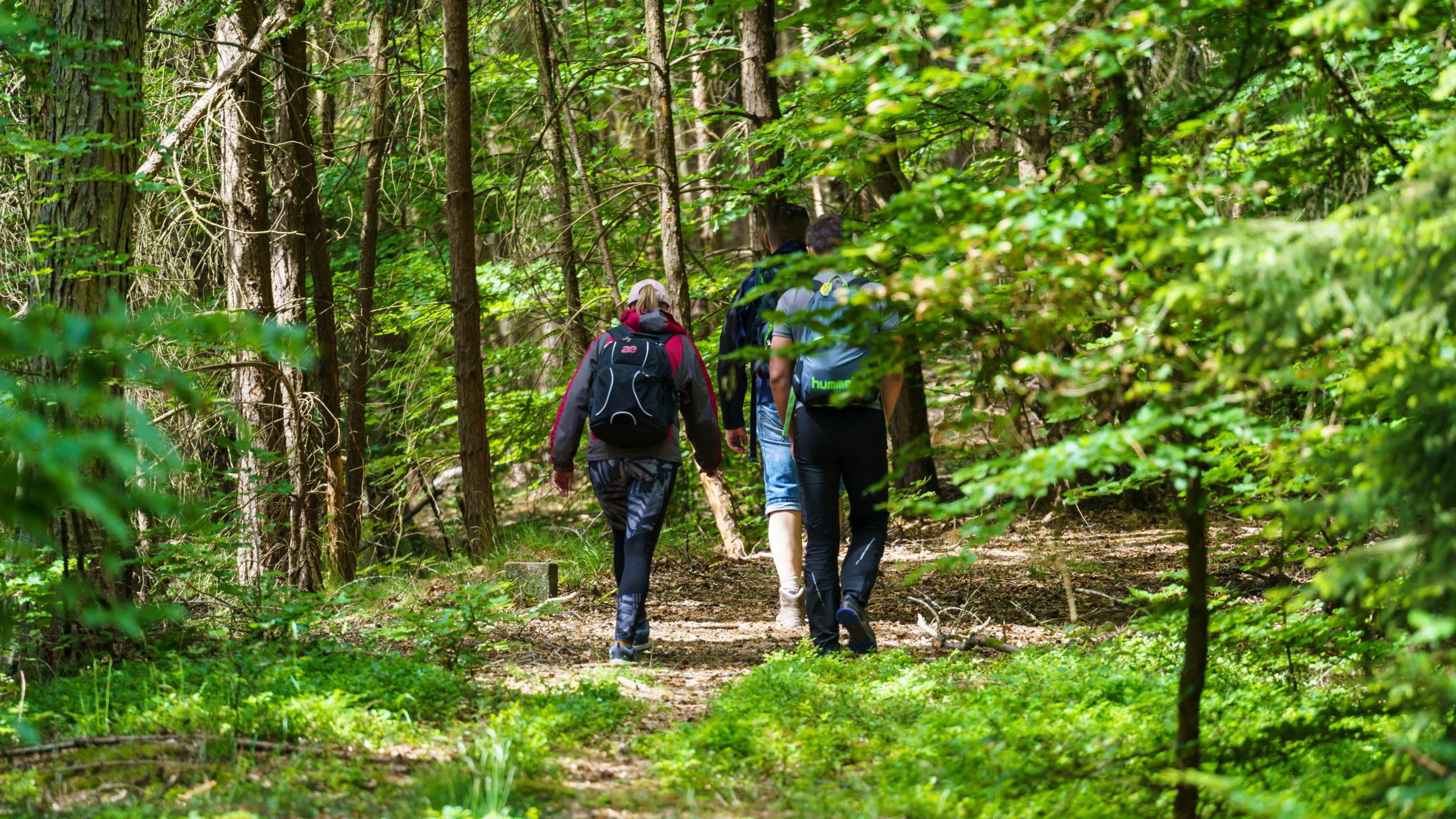 Grenzweg Gerstunger Forst, auf dem gemeinsamen Grenzweg