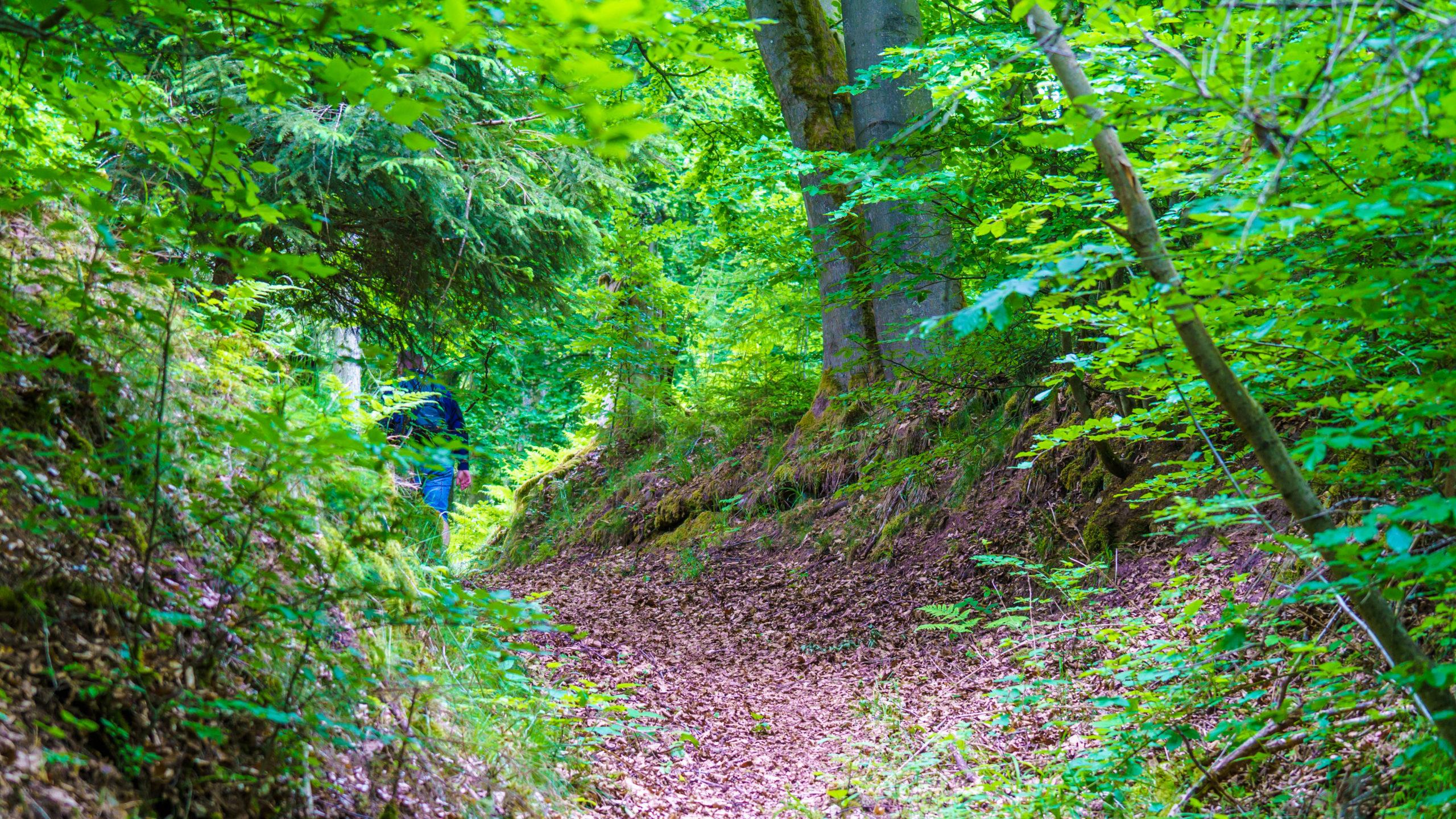 Grenzweg Gerstunger Forst, weiter auf dem gemeinsamen Weg