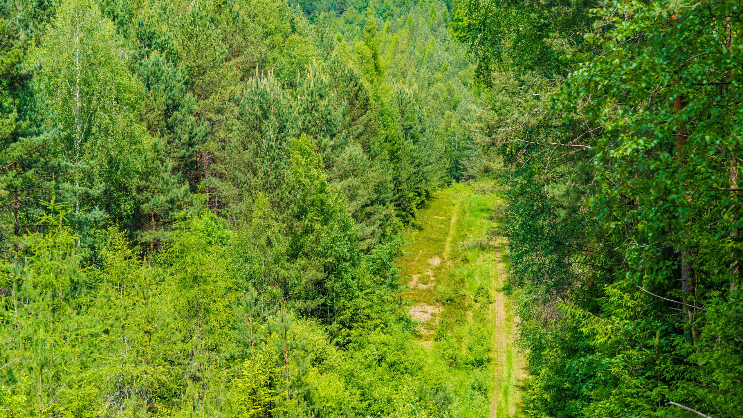 Grenzweg Gerstunger Forst, Kolonnenweg im Blankenbacher Tal