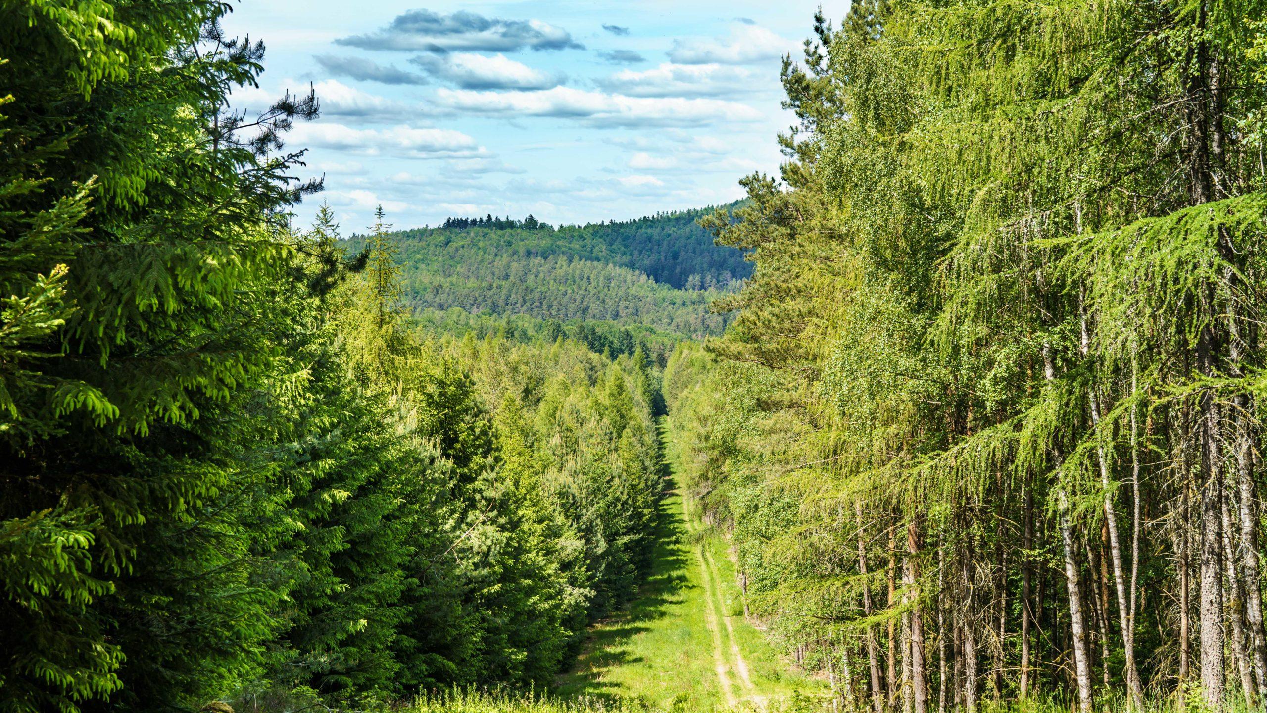 Grenzweg Gerstunger Forst, auf dem Kolonnenweg vom Blankenbacher Tal zum Stillmes