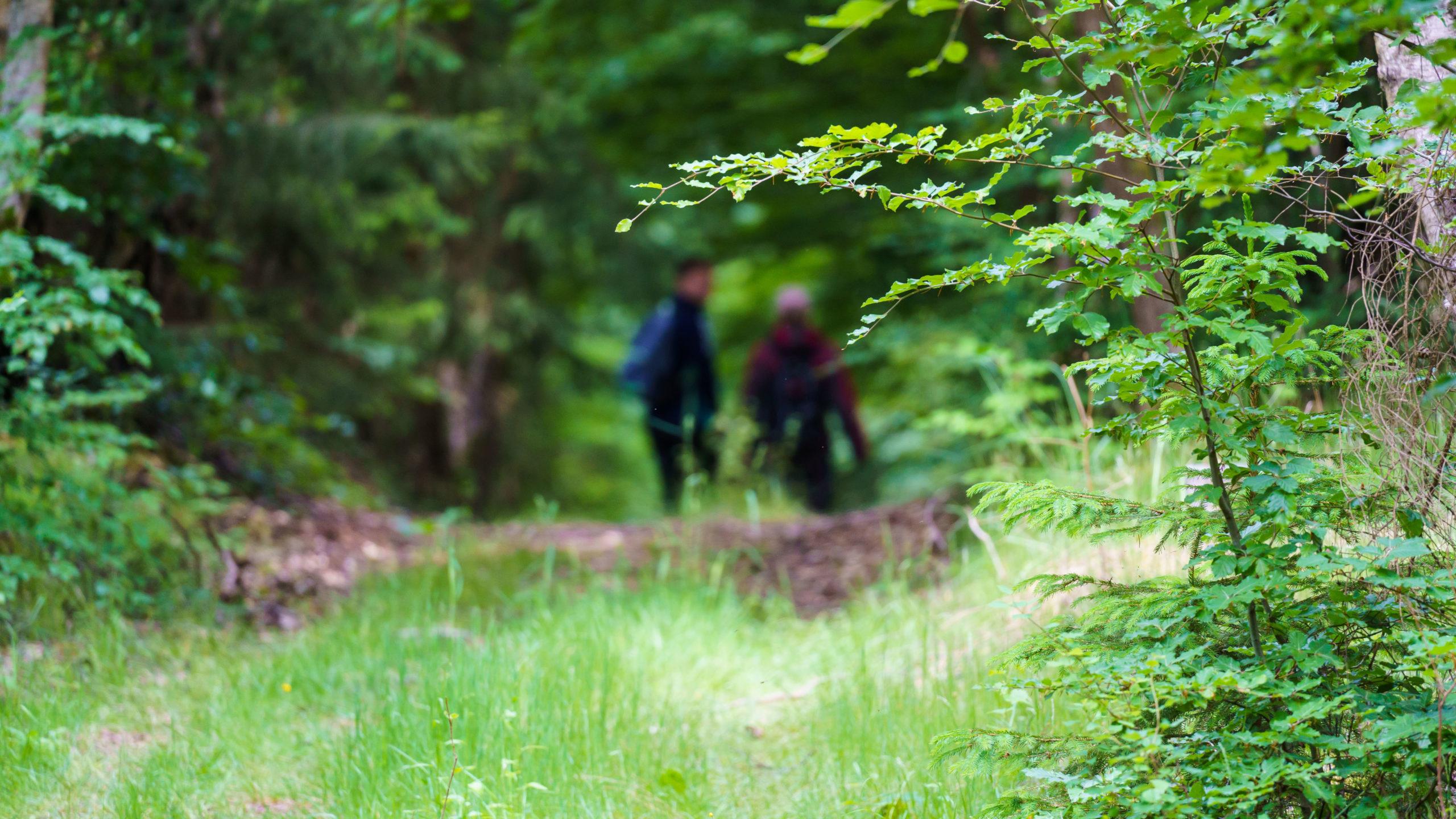 Grenzweg Gerstunger Forst