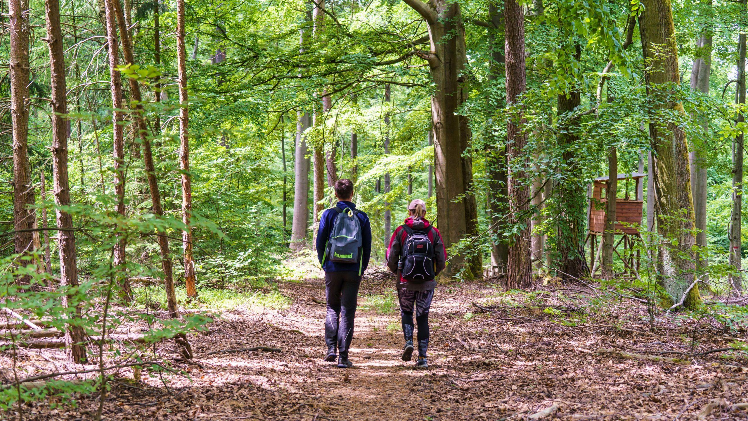 Grenzweg Gerstunger Forst - und weiter auf dem gemeinsamen Weg