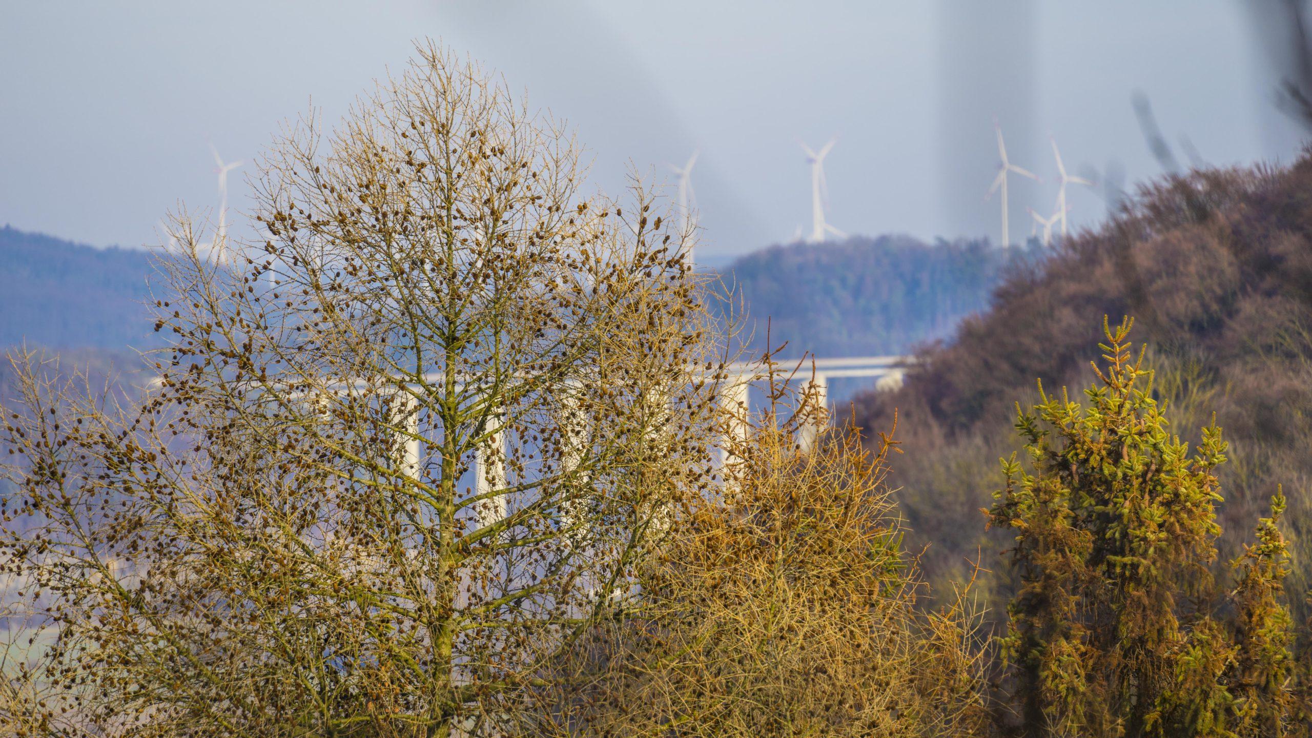 Lauchröden, Brandenburg, Blick Richtung Werra-Talbrücke bei Hörschel/Eisenach