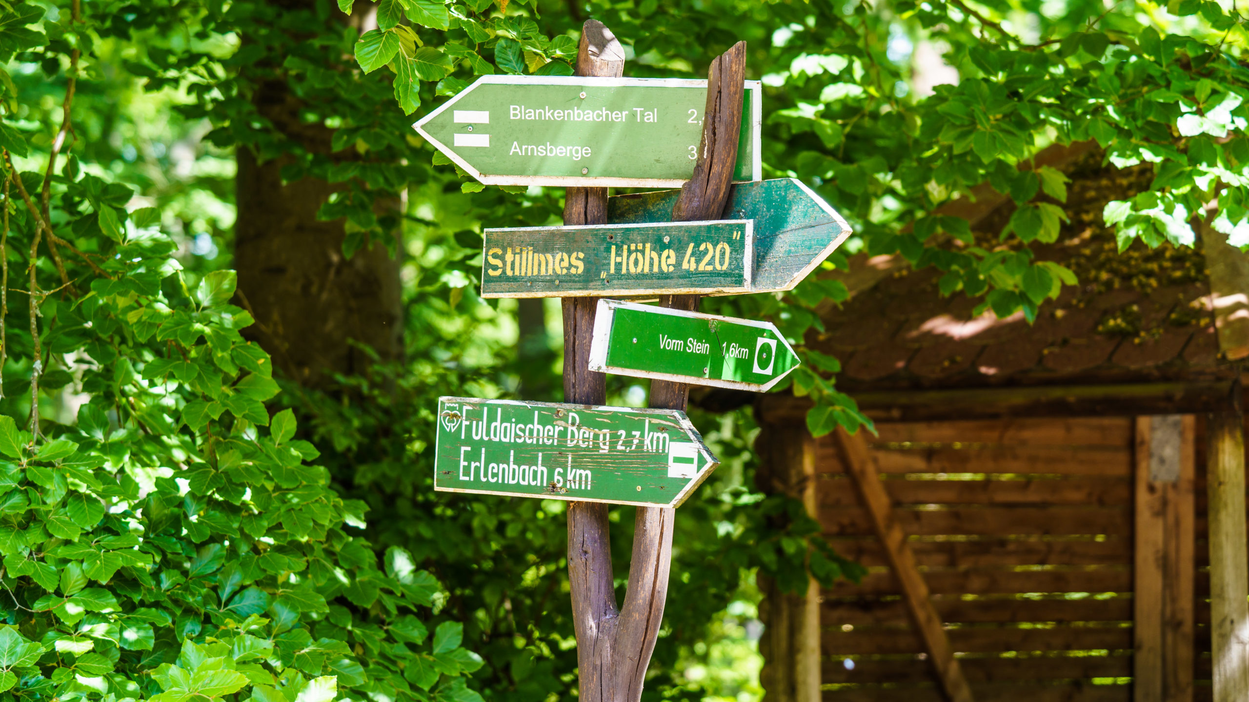 Grenzweg Gerstunger Forst, auf dem Kolonnenweg am Stillmes