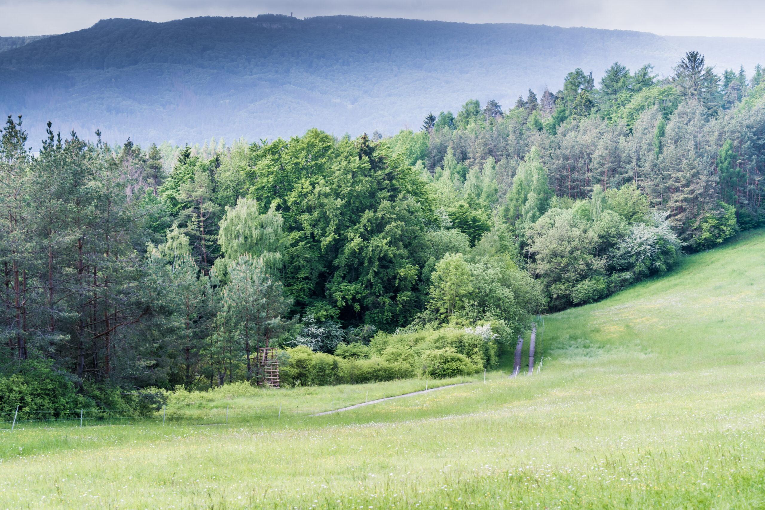 Wanderweg Mainzer Köpfe - gegenüber Berg Plesse mit Aussichtsturm