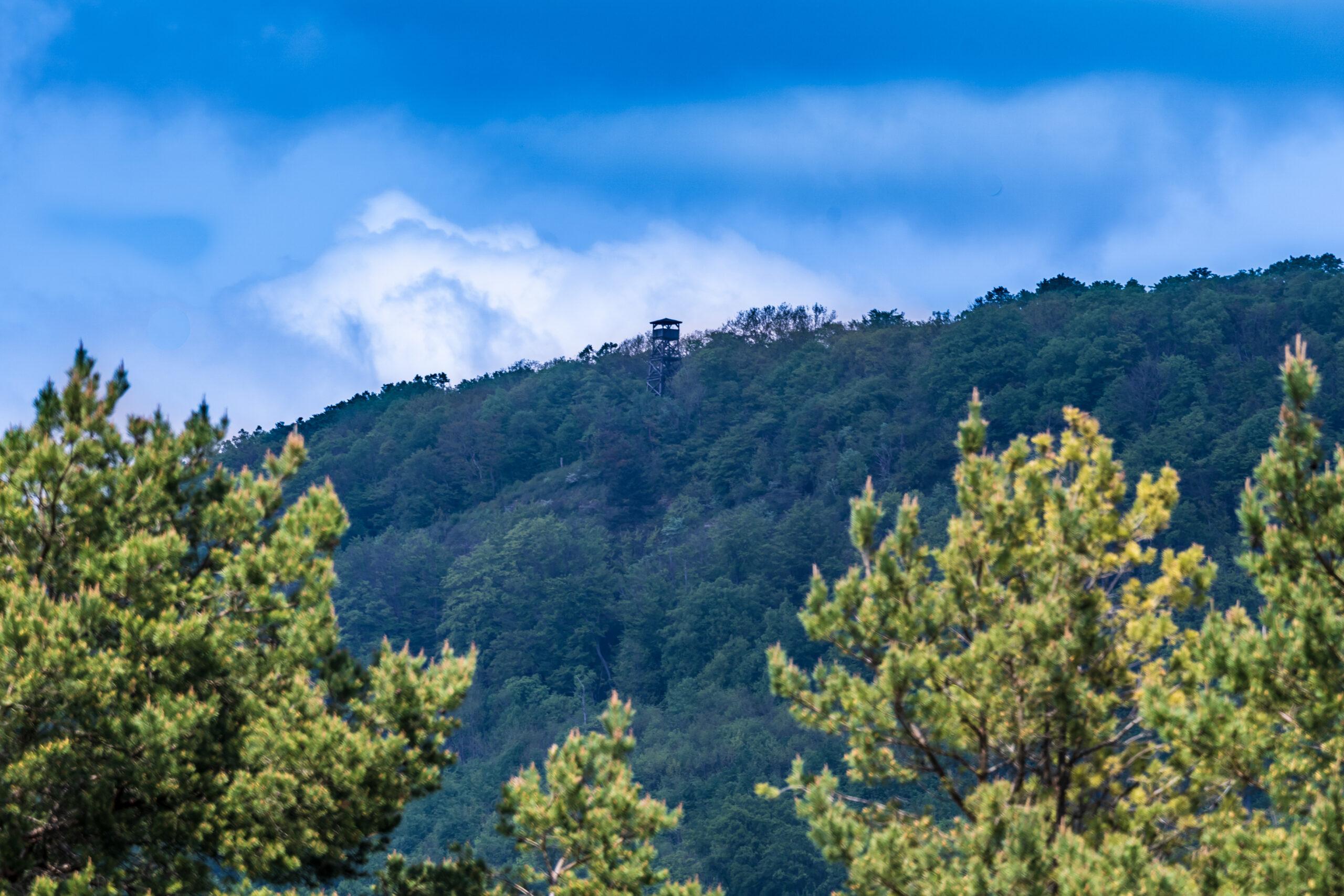 Plesseturm (Berg Plesse 479,6 m ü. NHN)